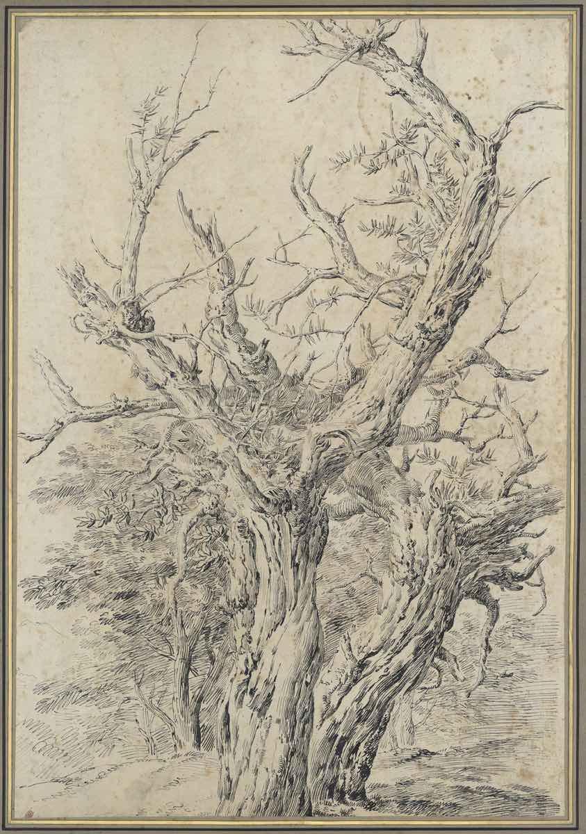 Jean-Antoine Constantin Etude d'arbres - Plume et encre grise sur papier - Musée des Beaux-arts de Marseille