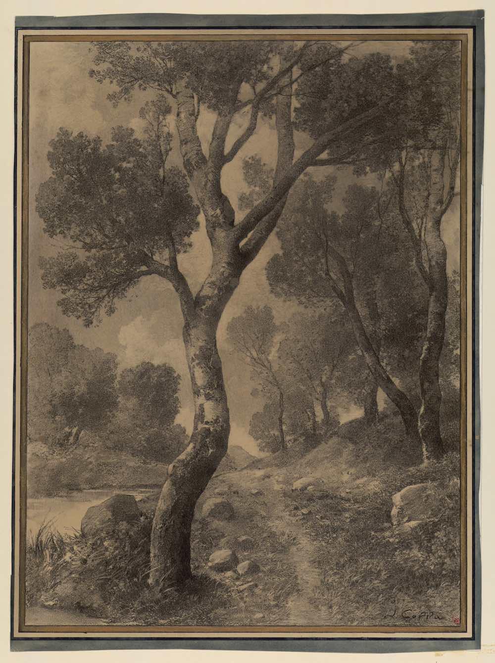 Joseph Colla Etude d'arbres - Fusain sur papier - Musée des Beaux-arts de Marseille